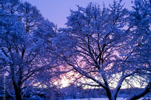 Remembering Winter – Fondly!