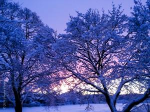 Winter in MA