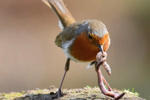 The Early Bird . . .