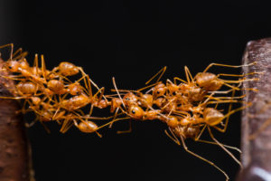 Ants, Hungry and Leadership
