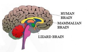 Major Brain Components