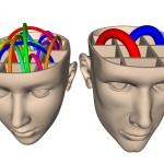 Male & Female Brains Wired Differently